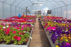 pěstování-květin