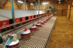 slepice-produkce-vajec-na-volné-podestýlce
